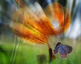 Landing Orchidia