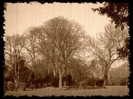 Old Peterborough