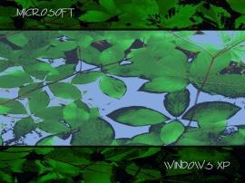 Leafy Windows