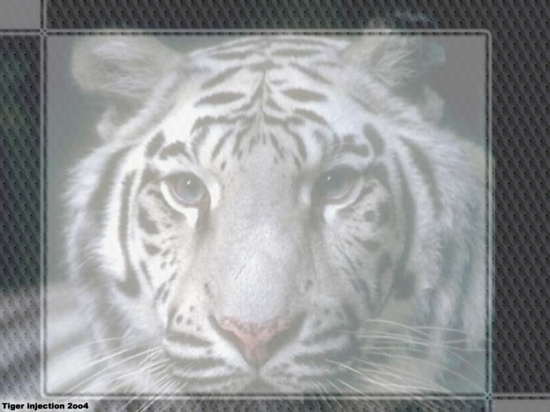 Tiger injection 2oo4
