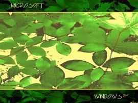 Leafy Windows Yellow