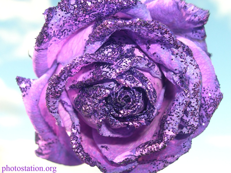 Flowers_rose