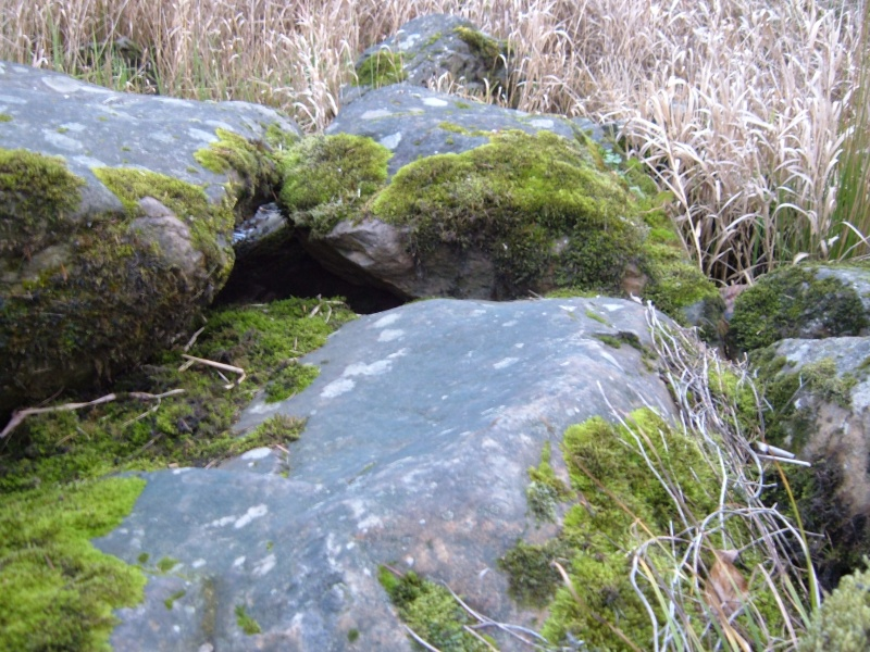 Pond rocks