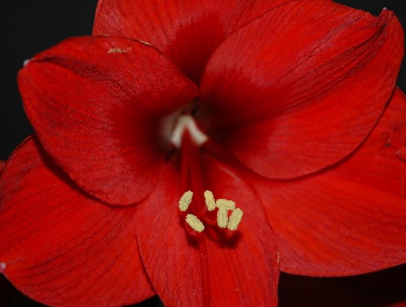 flower_RED