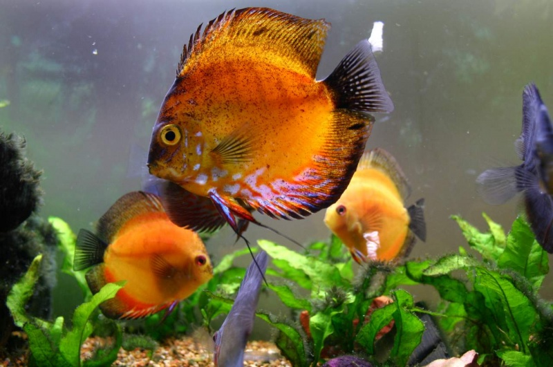 Grimspoon´s Fish