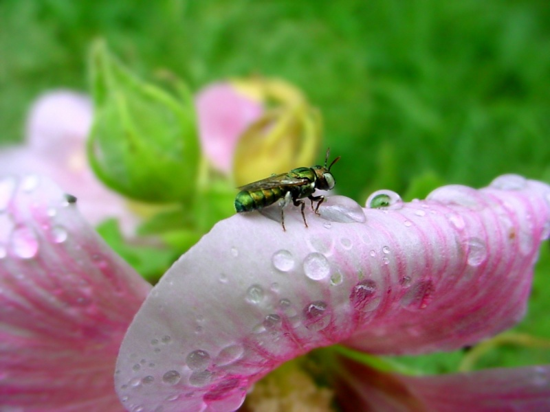 A little insect on a Flower