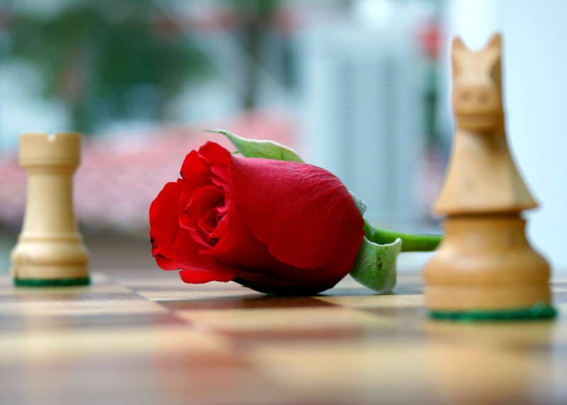 Rose on chess board
