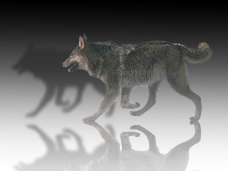 Wolf_mirror