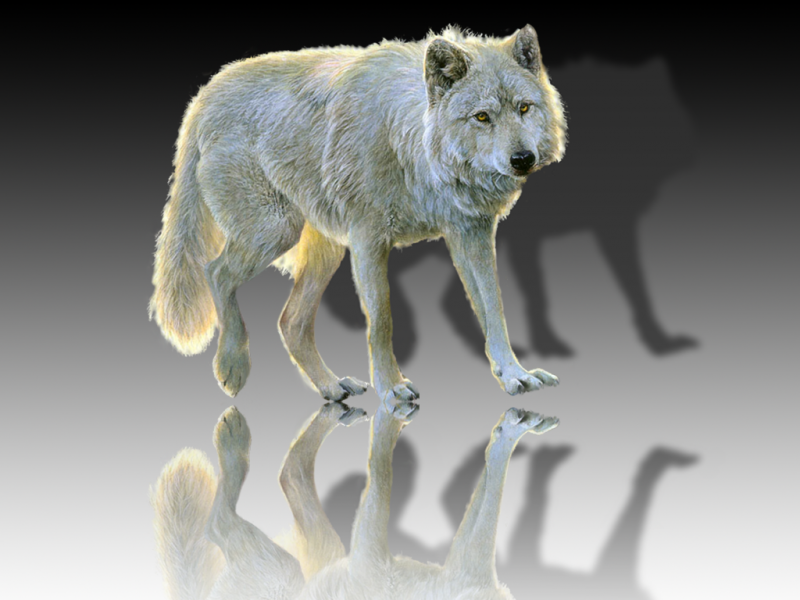 Wolf_mirror2