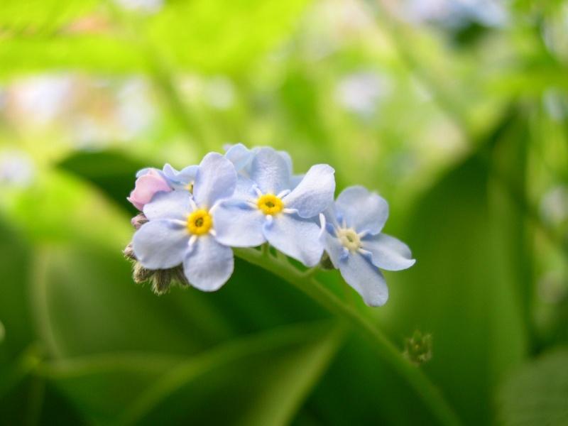 Flower 004