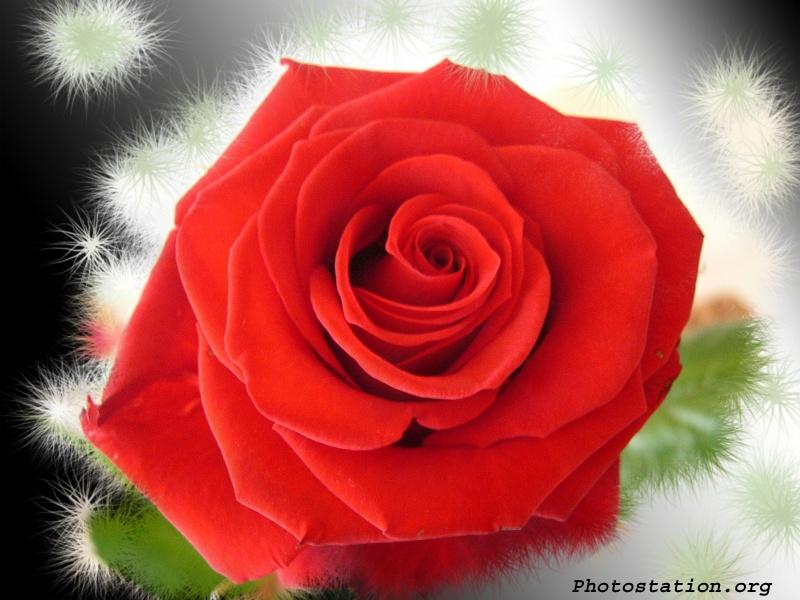 Lowe Flower