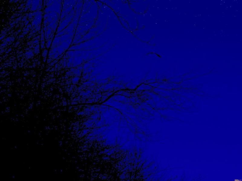 Night  Flight in Blue