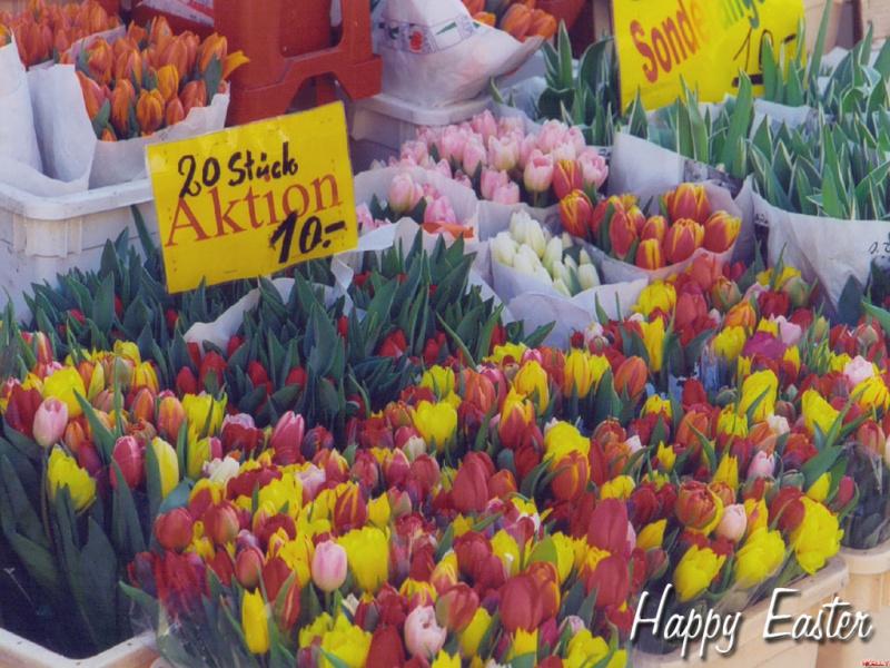 Austrian Easter Flowers
