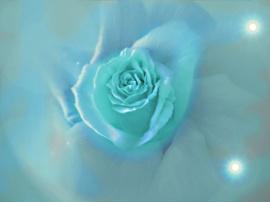 Flower a