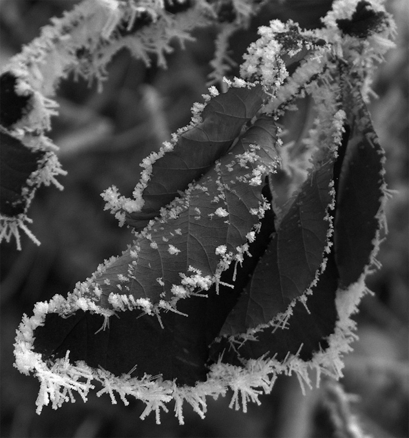 Frozen Leave II