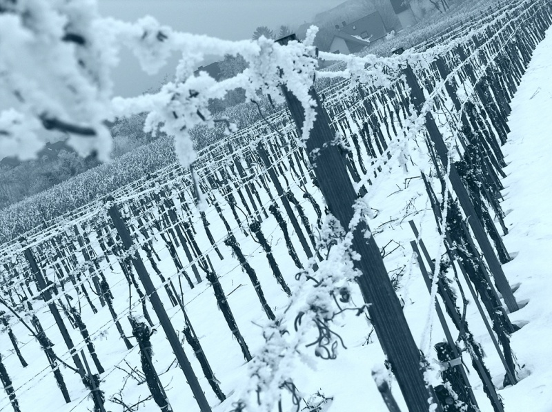 Icy Winegarden