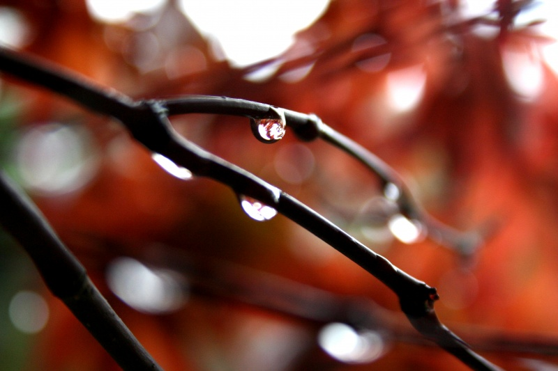 A Drop on a stem