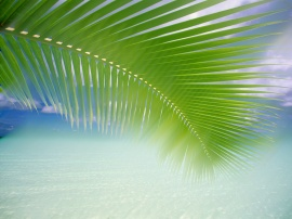 Tropic 5365 Blended