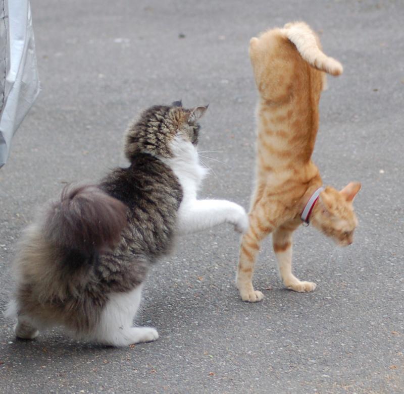 Cat-nastics