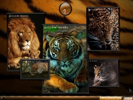 My Favorites- Part 2  BIG CATS