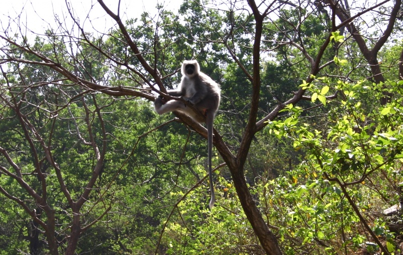 A baboon in the forest