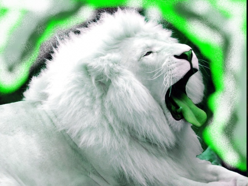 enviouse lion