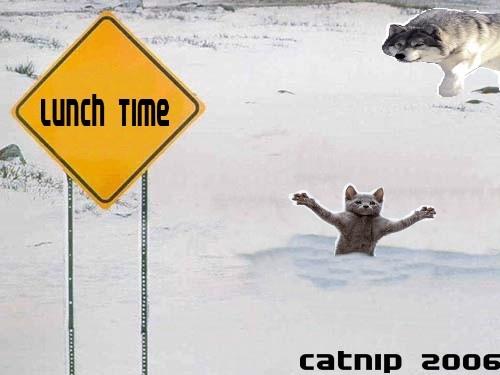 Cattack