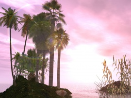 Pink sky and palm tree