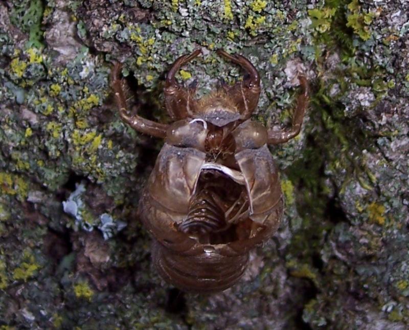 Abandoned Bug