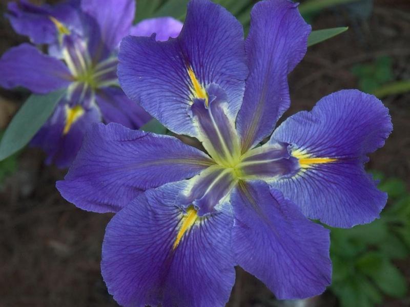 LavenderLeaves