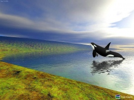 Big Orca in the Fly