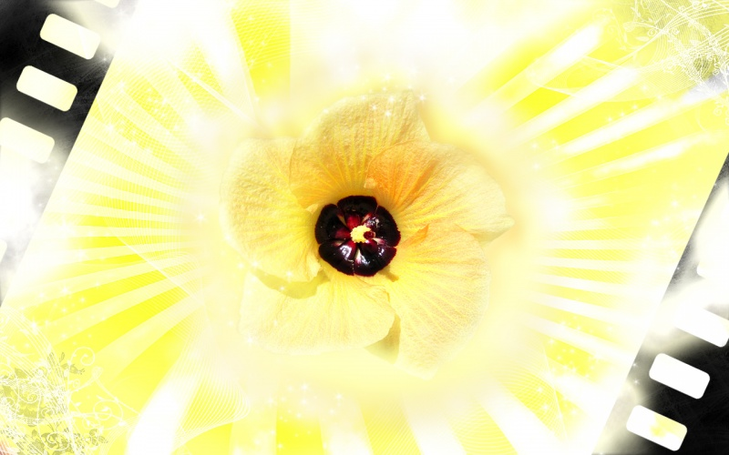 yellow bling flower