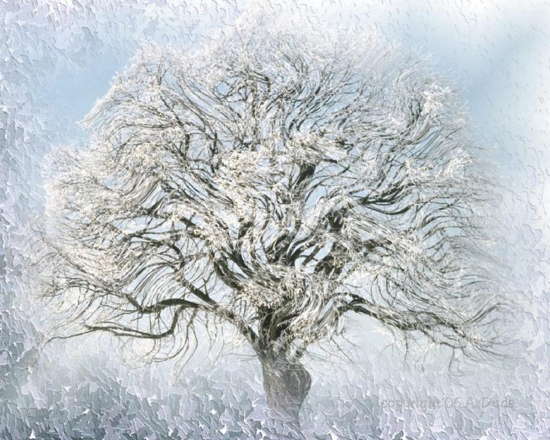 Ice Willow