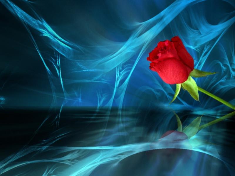 Love_rose