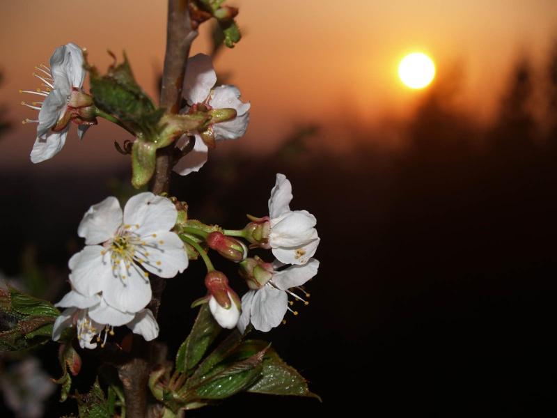 Spring Boc Slovenia