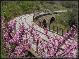 Railway Beauty