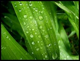 When There Was Rain