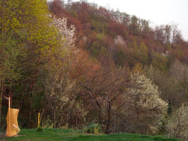 Springtime Boc Slovenia 01