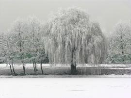Willow River Drava Slovenia