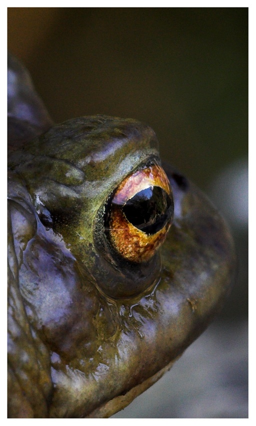 Toad Eye View