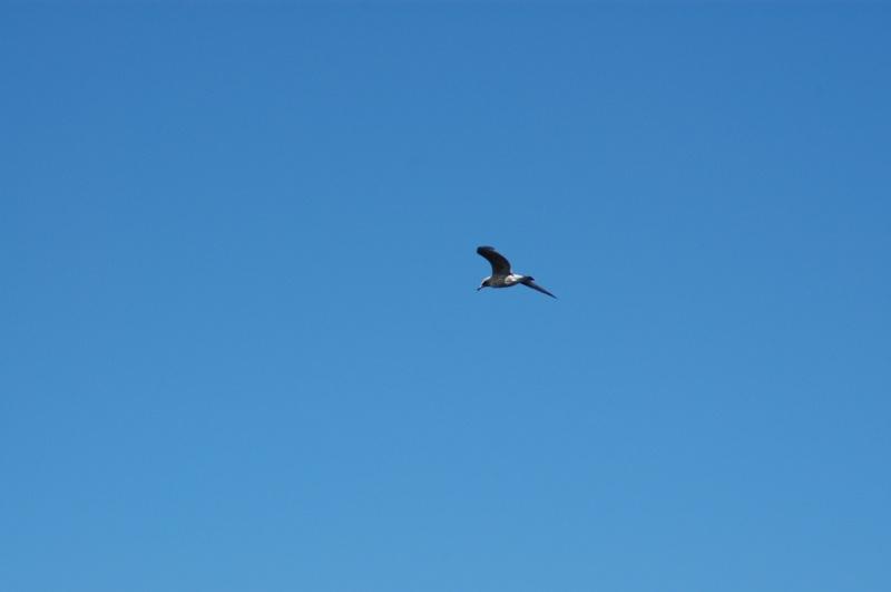 Seagull,Lake Ladoga