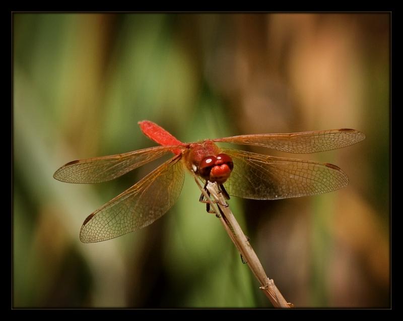My Little Red Friend