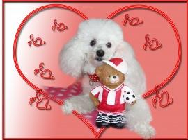 st. Valentines 3