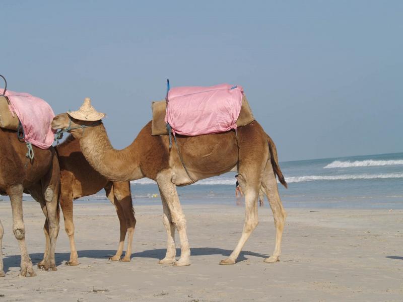 Beach Djerba 6