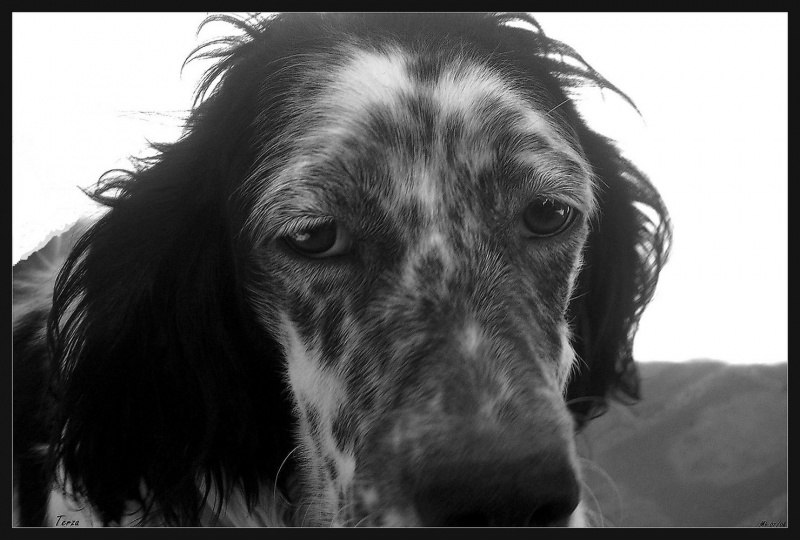 My dog 02