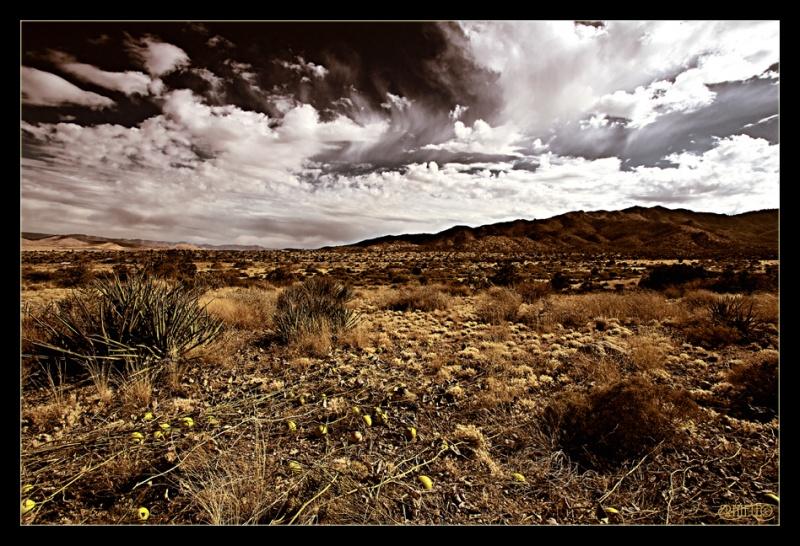 Surreal Desert Landscape