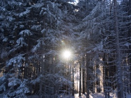 Winter snow - Pohorje