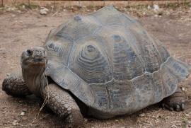 turtle wide shot