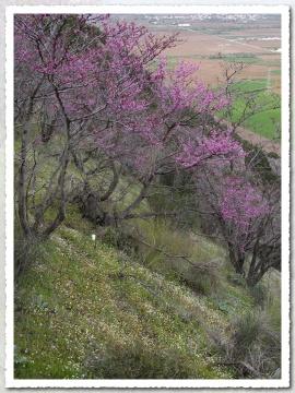 Warm Breath of Spring II