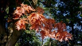 Autumns Change